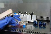 Researcher sampling Viruses under a Biologic hood in a Molecular biology lab