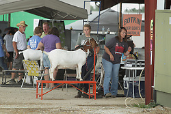 03 August 2017:  A handler vacuums a goat at the 2017 McLean County Fair<br /> <br /> #alphoto513