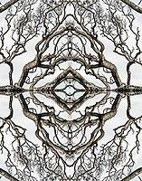 Mirrored tree study