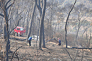 After the flames died down forest rangers are clearing away dead trees to prevent additional harm from falling trees and branches Photographed in the Carmel mountains, Israel December 9 2010