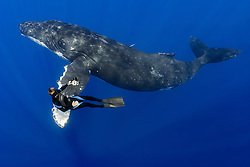 humpback whale, Megaptera novaeangliae, and diver, Pacific Ocean, Model Release: MR-000045