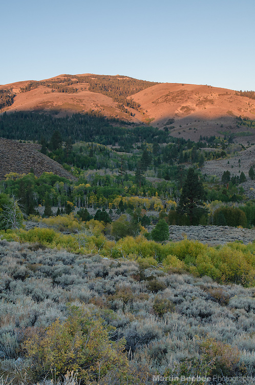 Alpenglow on ridge above quaking aspen (Populus tremuloides) in the valley of Little Walker River, fall, Toiyabe National Forest, California