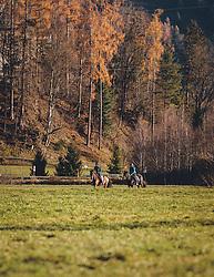 THEMENBILD - zwei Reiter reiten mit ihren Pferden über eine Wiese, aufgenommen am 18. November 2020, Zell am See, Österreich // two riders ride with their horses over a meadow on 2020/11/18, Zell am See, Austria. EXPA Pictures © 2020, PhotoCredit: EXPA/ Stefanie Oberhauser