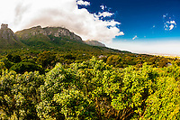 View of Table Mountain from the Tree Canopy Walkway, Kirstenbosch National Botanical Garden, Cape Town, South Africa.