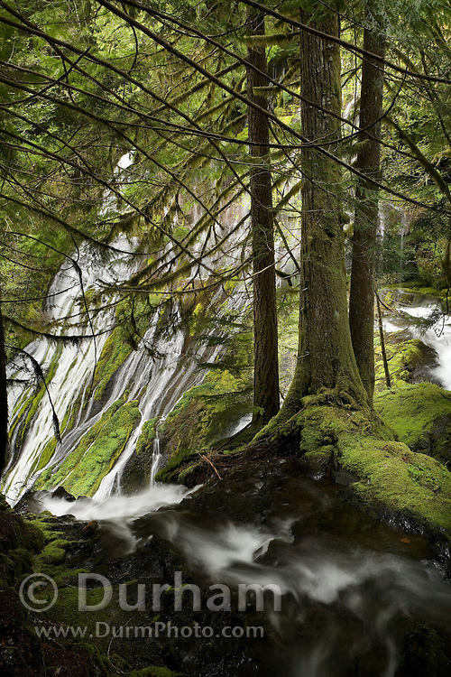 A portion of upper Panther Creek Falls in the Wind River Experimental Forest, Oregon.