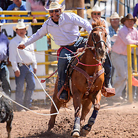 090514       Cable Hoover<br /> <br /> Shandell Glasses chases down his calf for 10.9-second run in the tie-down roping of the Navajo Nation Fair Rodeo in Window Rock Saturday.