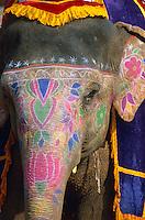 Inde. Rajasthan. Jaipur. Elephant peint au fort d'Amber. // India. Rajasthan. Jaipur. Elephant at the Amber fort.