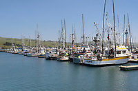 Pleasure boats and fishing boats moored in Bodega bay Marina, California