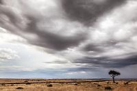 Storm rolls across the Masai Mara, Kenya.