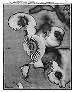 Solaroid - Shells - Ammonite 3 - This is a solarised polaroid photo art print by Paul Williams who invented the technique and is the only photographer to have used it. The process is sadly no longer possible. Taken in 1989,