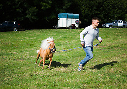 © Licensed to London News Pictures.15/08/15<br /> Rosedale, UK. <br /> <br /> A young man exercises his Shetland Pony during the Rosedale Country Show. This mainstay annual event remains as popular as ever attracting visitors and entrants from across the region.<br /> <br /> Photo credit : Ian Forsyth/LNP