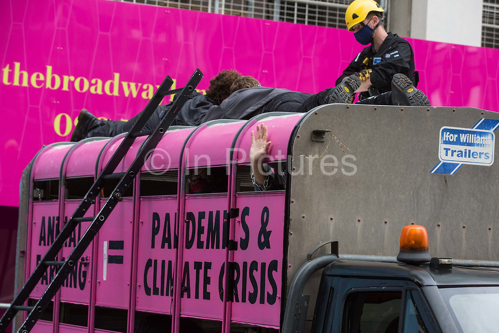 A British Transport Police officer attends to animal rights activists from Animal Rebellion who had glued themselves to the top of a truck in order to blockade the Department of Health and Social Care on 3 September 2020 in London, United Kingdom. Animal Rebellion activists are protesting in solidarity with victims of the global food system and to demand that the UK transitions to a sustainable plant-based food system.