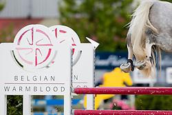 Laheyne Dieter, BEL, Pico-Belle van Twee Eiken<br /> BK Young Horses 2020<br /> © Hippo Foto - Sharon Vandeput<br /> 6/09/20
