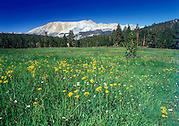 A meadow filled with flowers, Sierra Nevada, California.