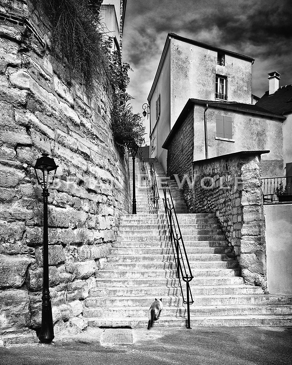 A siamese cat roams the neighborhood in the hillside village of Carrieres-sur-Seine, France.  Aspect Ratio 1w x 1.25h