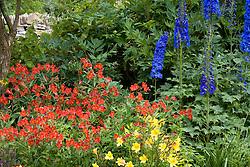 Alstroemeria 'Vesuvius' - Peruvian lily - with Delphinium 'Sabrina' and Hemerocallis