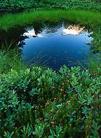 Hannegan Pass; Mt Ruth; Mt. Baker National Forest; North Cascades; WA, Pond, Reflection, Close Up, Alpine