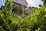 Sharon city worker Lou Rodgers cuts down high grass and weeds at a house on Ohio Street in Sharon.