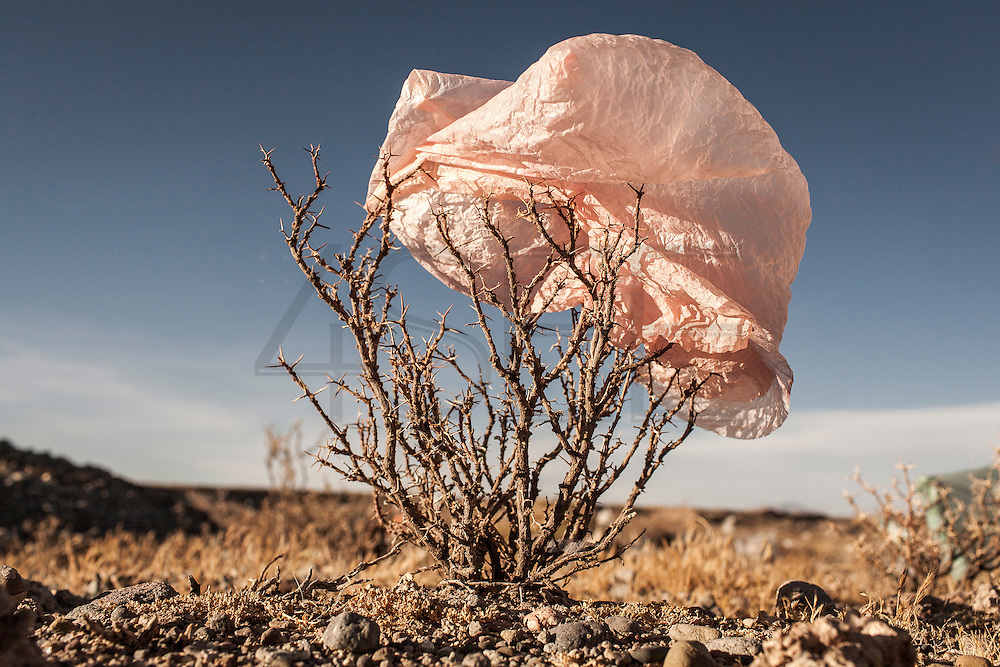 08/11/2014 - Uyuni, Bolivia:Plastic tree #21. Plastic bags are part of the landscape of the Bolivian Altiplano. The accumulation of plastic bags on the environment cause deterioration of the landscapes and agriculture soils and it is associated to the death of domestic and wild animals.