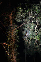 Research assistant Zafer Kizilkaya climbs a rope into the rain forest canopy at night in Danum Valley, Borneo Island.