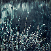 Dew drops on leaves of grass - texturized photograph