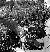 Zoo - Animals and Visitors at Dublin Zoo.15/07/1953