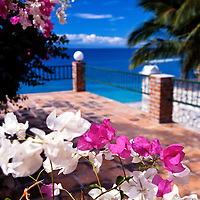 Colorful pink and white bougainvillea of haiti.  Photo taken at a Kaliko Beach house rental in western Haiti.