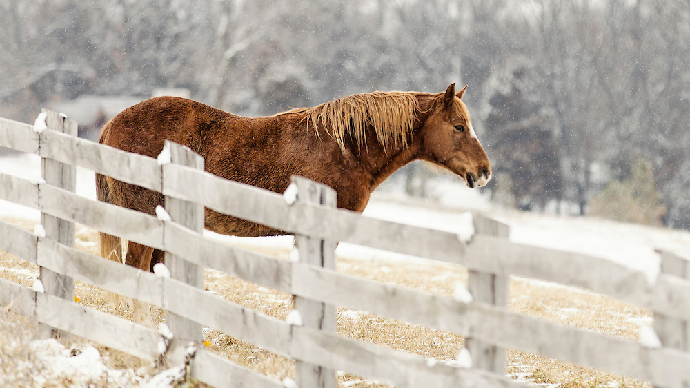 A Horse tries to stay warm as winter flurries begin to fall