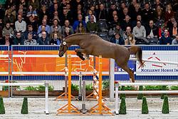 053, Maestro Gusto vd Laarse Heide Z<br /> KWPN hengstenkeuring - 's Hertogenbosch 2020<br /> © Hippo Foto - Dirk Caremans<br />  30/01/2020