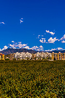 Almunecar,  Costa Tropical, Granada Province, Andalusia, Spain.