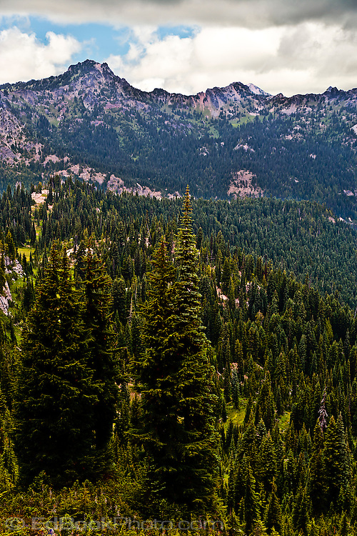Cascade Mountain Range near Chinook Pass Willian O Douglas Wilderness in the Wenatchee National Forest, Washington state, USA