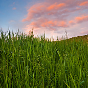 An interesting composition of backyard grasses and brilliant pink clouds at sunset, Eagle, CO.