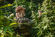 Howard checks for bugs and mites on his plants. They are about a third of they way grown. This is very important, as bugs can destroy an entire crop over night.