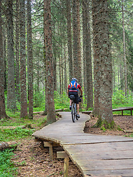 Mountain biker cycling on boardwalk in the forest, near Todtnauberg, Baden-Wuerttemberg, Germany