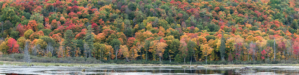 Beaver Pond and Fall foliage color at Gatineau Park in Gatineau, Québec, Canada.  Photographed from the Gatineau Parkway in during Fall Rhapsody at Gatineau Park.