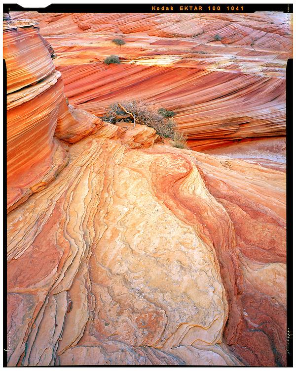 South Coyote Buttes, AZ 11/6/2015<br /> Afternoon glow, South Coyote Buttes<br /> f/32, 1 second exposure on Kodak Ektar film<br /> Alex Jones / www.alexjonesphoto.com
