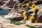 Water flows into a small pool in a ravine in the Superstition Wilderness near Gold Canyon, Arizona. The water source in the Sonoran Desert was important to the Native American Hohokam people, who settled in the area as early as 500 A.D. The Hohokams left behind some petroglyphs, which are visible on the rocks in the top center of the image.