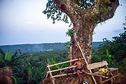 A boy at dusk sits on a rough bench in a clearing in the jungle, Principe, Sao Tome and Principe<br /> Sao Tome and Principe, are two islands of volcanic origin lying off the coast of Africa. Settled by Portuguese convicts in the late 1400s and a centre for slaving, their independence movement culminated in a peaceful transition to self government from Portugal in 1975.