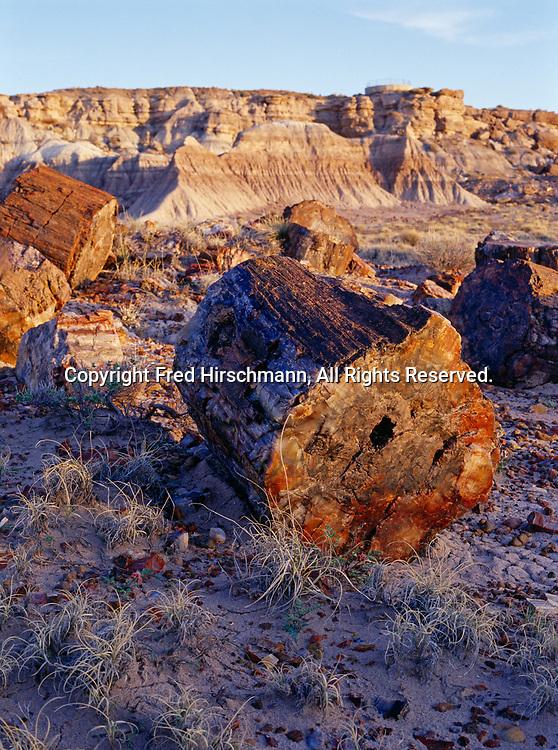 Petrified logs at Jasper Forest, Petrified Forest National Park, Arizona.