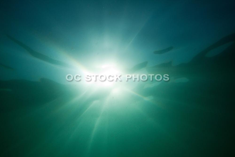 Underwater in the Ocean in Laguna Beach