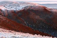 Carpathian beech forest at Wolowy Garb Peak, Bieszczady National Park, Poland