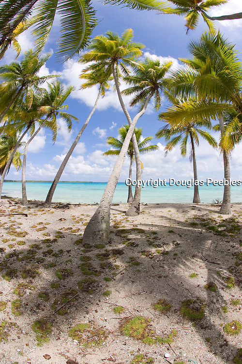 Beacch, Takapoto, Tuamotu Islands, French Polynesia<br />