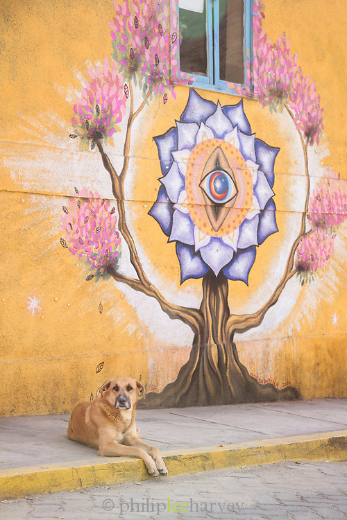 Dog on city street and wall with street art, Pisco Elqui, Equi Valley, Chile