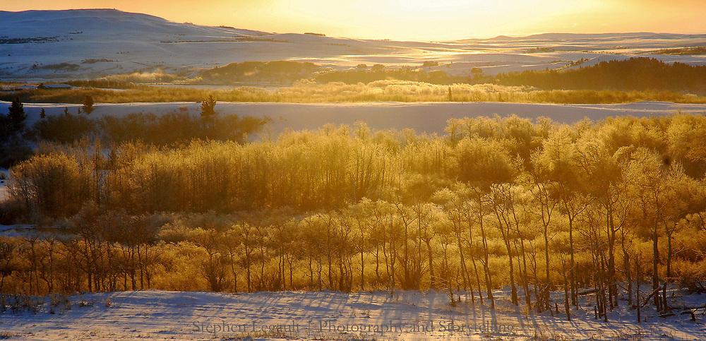 Aspens, Dawn, Waterton Front, Alberta