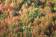 Fall foliage lights up a hillside overlooking the township of Arrowtown, in the South Island of New Zealand.