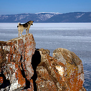 A dog on Olkhon Island on Lake Baikal in Siberia, Russia. .They are a group of five people: Justin Jin (Chinese-British), Heleen van Geest (Dutch), Nastya and Misha Martynov (Russian) and their Russian guide Arkady. .They pulled their sledges 80 km across the world's deepest lake, taking a break on Olkhon, the world's forth-largest lake-bound island. They slept two nights on the ice in -15c. .Baikal, the world's largest lake by volume, contains one-fifth of the earth's fresh water and plunges to a depth of 1,637 metres..The lake is frozen from November to April, allowing people to cross by cars and lorries.