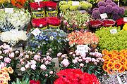Bunch of bright colour flowers - roses, peonies, gerbera, allium at famous flower market, Bloemenmarkt in Amsterdam, Holland