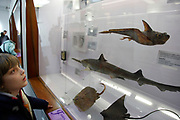 The Natural History Museum, London. Visiting children look at the displays in the Fishes, Amphibians and Reptiles gallery.