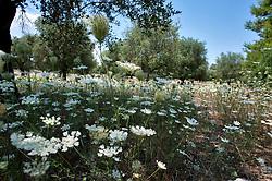 Percorsi alberati nei pressi dei laghi limini di Otranto (LE)