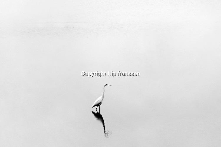 Nederland, Ooijpolder, 4-12-2019Mist in de polder. een witte reiger staat in het ondiepe water van de oude waal . Foto: Flip Franssen